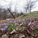 cvetoči travniki...