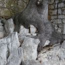 drevo na skali
