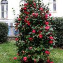čudovit cvetoč grm...