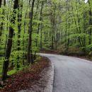 svežina pomladnega gozda nad Boštanjem