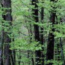 pomirjujoče zelena barva