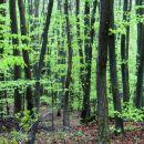 spet v gozdu...