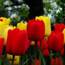 tulipani pri eni hiši v malkovcu