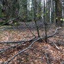 steza po gozdu do vrha sivke še ni očiščena