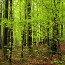 v gozdu pa neverjetna svežina zelene barve...