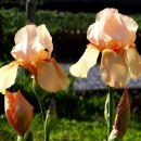 takoj na začetku se morava zamuditi z občudovanjem cvetja v komnu...