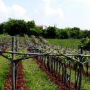 pogled čez vinogradu proti naslednjemu cilju: Pliskovica