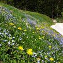 cvetni vrt ob poti