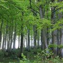 listnat gozd nad pustim rovtom