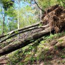 nekaj podrtega drevja na poti, ki pa se ga brez težav obide