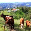 živina na paši nad lepo urejeno kmetijo na čudoviti lokaciji