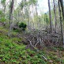 podrtija v gozdu
