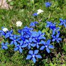 najlepša modra barva