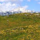 z rumenim ranjakom prekrit travnik in pogled na ojstrico