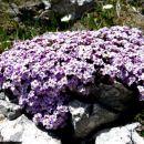 pirinejski kamnokras - čudovit okras kamenju