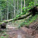 veliko podrtega drevja, vendar prehodno