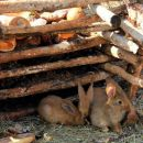 mini živalski vrt na prijetnem počivališču Bale ob cesti Reka-Pula...