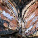 vzorci v kamnu
