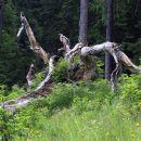 gozdna umetnina