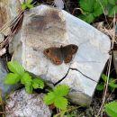 neznani metuljček, desno pa neki hrošček ... ljudi pa nobenih danes
