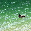racman na rabeljskem jezeru