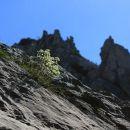 nežno cvetje sredi skalovja