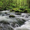 mirtoviški potok je zelo vodnat...