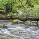 podrto drevo in malce meglic nad vodo, po kratki plohi