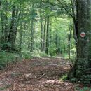 zadnji del poti poteka zložno po gozdu