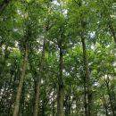 gozdovi molčijo o skrivnostih preteklosti...