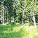 pohorski gozd