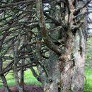 zanimiva združba dreves