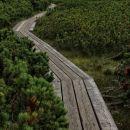 lesene stezice na šotnem barju, ki bi bilo sicer neprehodno