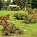 rosarium (rožni vrt): skromen zaradi slabega vremena