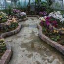 razstava orhidej