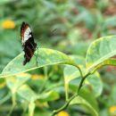 razstava metuljev