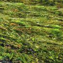 vodne trave