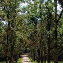 drevored ob gozdni cesti?!