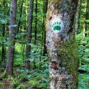 sled medvedje šape - oznaka roške pešpoti