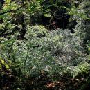 pogled z roba koliševke zakriva gosto vejevje, zato se dna ne vidi