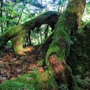 drevo se oprijemlje roba koliševke