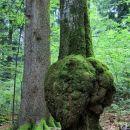 tudi drevesa zbolijo...