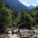 nad jaso jasenje: potok martuljek in veje podobne jelenjim rogovom