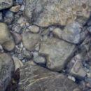 srček v vodi