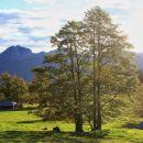 lepo drevo in rogatec v ozadju marjaninih njiv