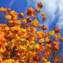 zlata jesen