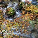 pogled skozi jesensko obarvano listje