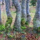 drevesa v šopku