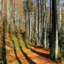 sence v gozdu na poti na ljubelj