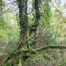 drevo v zelenem